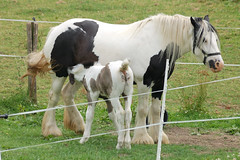 another couple / nog 'n paardje (friedkampes) Tags: horses horse d50 foal friedkampes abigfave