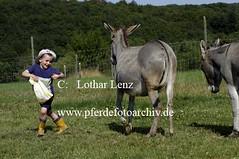 lz280704(29) (Lothar Lenz) Tags: deutschland esel 56812dohr