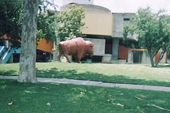 Plain Buffalo (aimeedars) Tags: aimeedars summer 2004 buffalo spiritofthebuffalo oklahoma ok publicart paintedbuffalo paintedsculpture painted statue