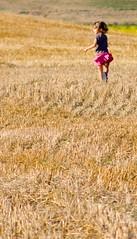 (.Eril) Tags: pink summer sun childhood yellow children gold nikon child estate wind wheat hill harvest rosa games run skirt giallo ora sole gonna colline vento giochi corsa grano bambina lorenzana infanzia orciano d80 festadegliaquiloni