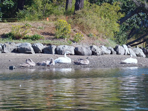 2008-08-03 Portage Inlet 074