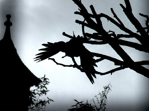 bird, house, shadow, tree, night