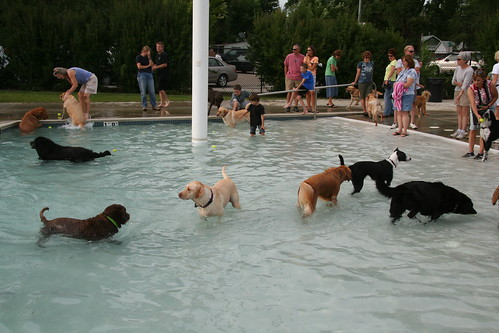 Longmont Dog Swim 2008