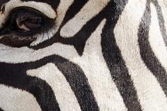 ABSTRACTO (DIAZ-GALIANO) Tags: white black eye rayas blanco canon ojo galiano negro safari reflejo lineas 30d cebra