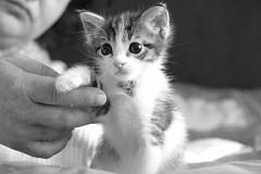 Ömürcan (Marchnwe) Tags: white black cat kitten little beyaz kedi siyah küçük