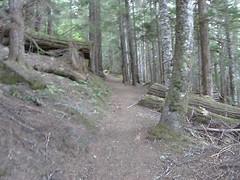 Early Shriners peak trail.