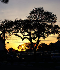 .Pôr do Sol (Rafael Coelho Salles) Tags: sunset pordosol brazil tree brasil backlight contraluz airplane photographer saopaulo professional sampa sp aviao arvore professionalphotographer fotografo profissional degrade rscsales fotografoprofissional rscsalles rscsallescom