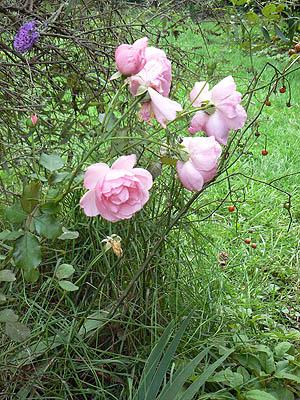 jardin ....jpg