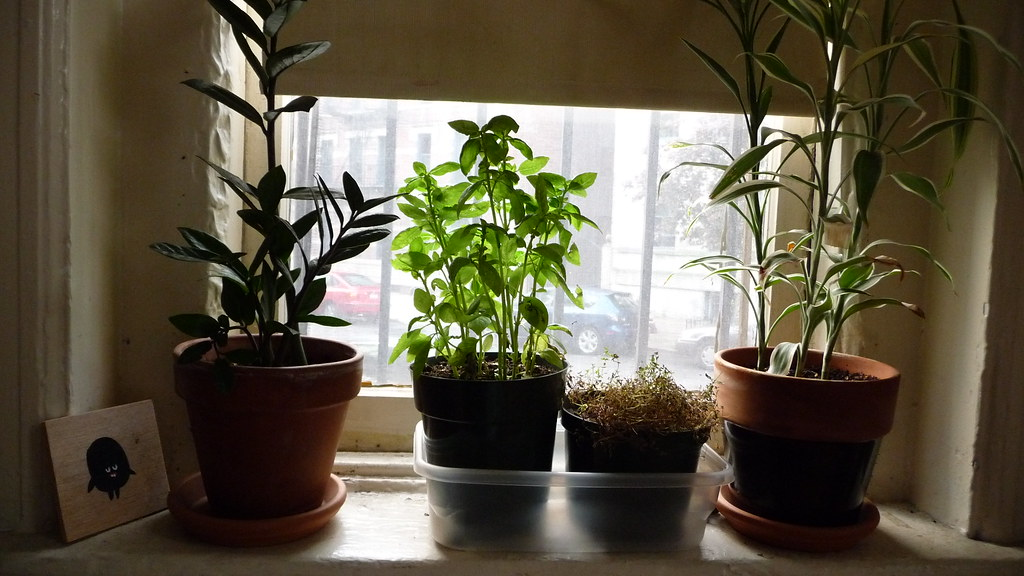Houseplants in the morning