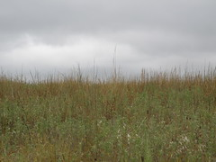 prairie grass on cloudy day