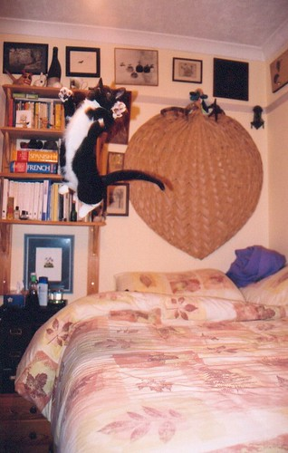 Flying cat!