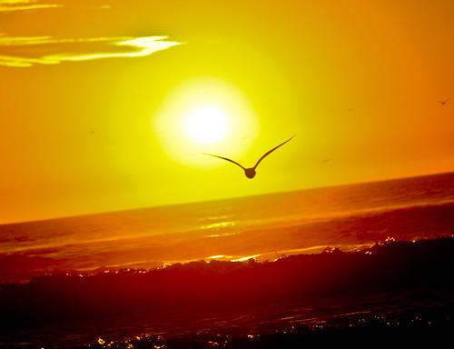 フリー画像| 自然風景| 海の風景| 夕日/夕焼け/夕暮れ| 水平線/地平線| カモメ| 橙色/オレンジ|     フリー素材|