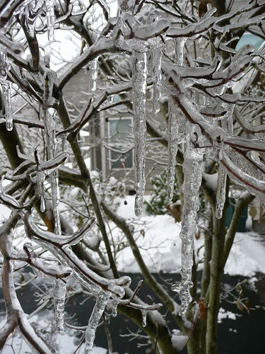view through icicles