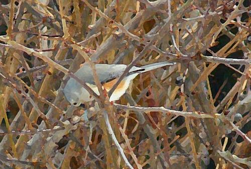 bird-in-prayer-8
