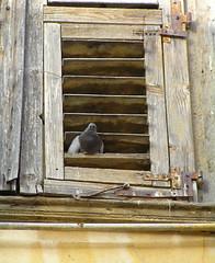 Greece - Navplion 2008 (Chris&Steve) Tags: door bird window vent greece doorway portal nafplion pidgeon nafplio nauplia nauplion ellda  hells hellenicrepublic 10millionphotos navplion  anapli   napolidiromania ellnikdmokrata elinikiimokratia