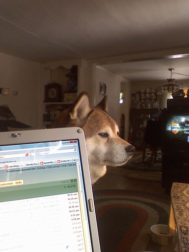 Wolf would like me to please move out of his chair by the window.