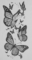 Drawing: Monarch Butterflies (Floyd Muad'Dib) Tags: usa white black art illustration america pen ink butterfly geotagged drawing united north butterflies drew illustrations drawings monarch states drawn stipple penandink monarchbutterfly stippling monarchbutterflies