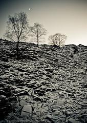 tree, tree, moon, tree, tree (c@rljones) Tags: trees winter moon snow ice wales frozen cymru freeze slate icy quarry slippery httpwwwrljonescouk rhiwbach