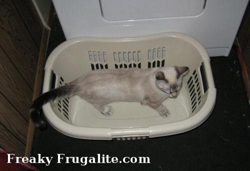 Livvy Laundry