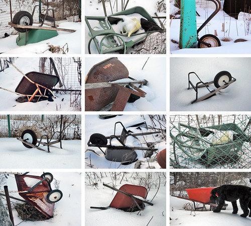 wheelbarrows in the snow