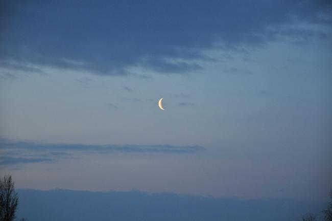 Morgonmånen