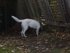 tala cody autumn 2008 038