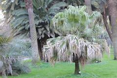 botanico 190 (blum1) Tags: cactus botanico ortobotanico
