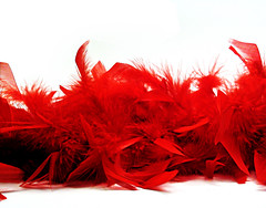 Feather boa (Photo courtesy of Samantha Sargent, stock.xchng)