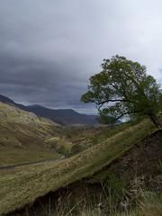 Glen Strathfarrar (TMCPhotographs) Tags: mountains tree nature scotland highlands moody country glen tc01 teresacarleton tmcphotographs