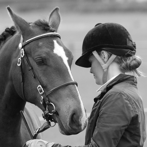 Equestrian by Dan Baillie