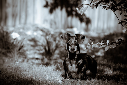 Tica Dog: 41.365 #TeamPhotoBlog by dhgatsby