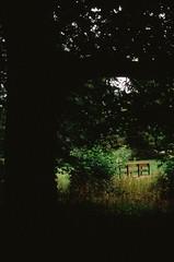 (stephanie.welling) Tags: uk color film 35mm canon ae1 united kingdom slide velvia oxford filmgrain