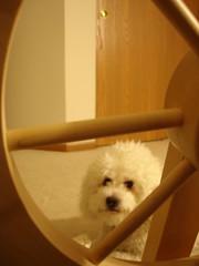 Phoebe with wheel