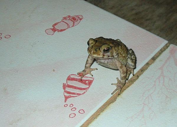 Жаба в санузле