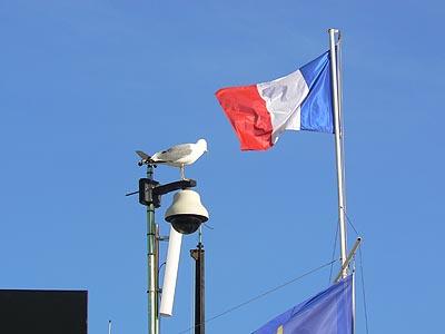 mouette et drapeau.jpg