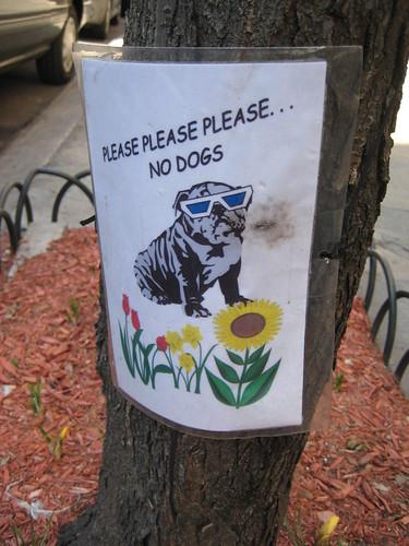 Please please please...no dogs