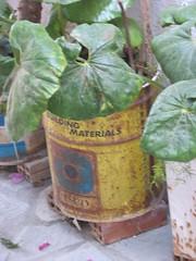 Alternatieve bloempot... (lisannekerstens) Tags: planten bloemen samos griekenland kokkari bloempot