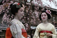 Takahiro and Kotoha (abbey j) Tags: japan cherry spring kyoto blossom maiko geisha  sakura  kimono obi gion shirakawa takahiro japn  kotoha