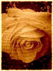 Poetry (Eddi van W.) Tags: light texture love rose creativity energy poetry handmade digitalart gimp textures creativecommons ritual meditation spirituality spiritual deepness kreativität spiritualität abigfave platinumphoto cyteck eddi07