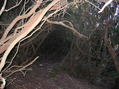 Sur le sentier végétal (pris au flash !) du col de Ferula