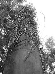 Overgrown grave, Necropolis