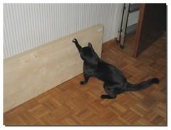 Fai da te (Cristina Negrini) Tags: cat blackcat gatto siriusblack gattonero faidate kissablekat