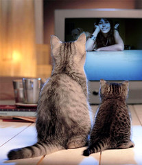 cats watching me on tv (Hatake_Tata) Tags: cats fun tv foto watching montagem bestofcats boc0708