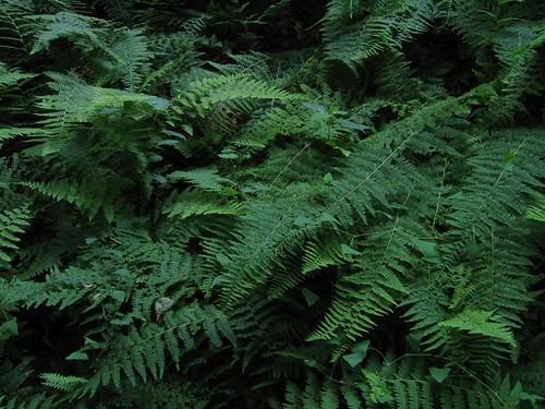 Clausland Mountain's fern gully