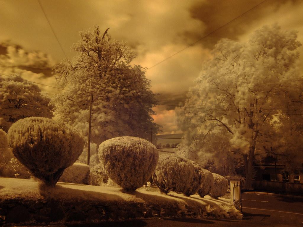 Garden - Infrared