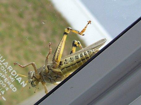 Big Bug!