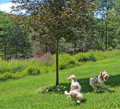 Annabella and Chucho at play