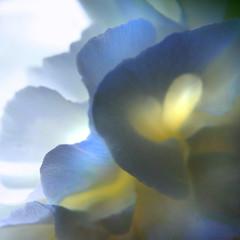 layers (janoid) Tags: bravo  abstractflowerpart janslightstyle janoidmagic janoidsstyle youranartist iseeahugeheart