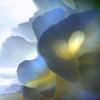 layers (janoid) Tags: bravo ♥♥♥ abstractflowerpart janslightstyle janoidmagic janoidsstyle youranartist iseeahugeheart