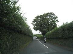 Hedgerow #3